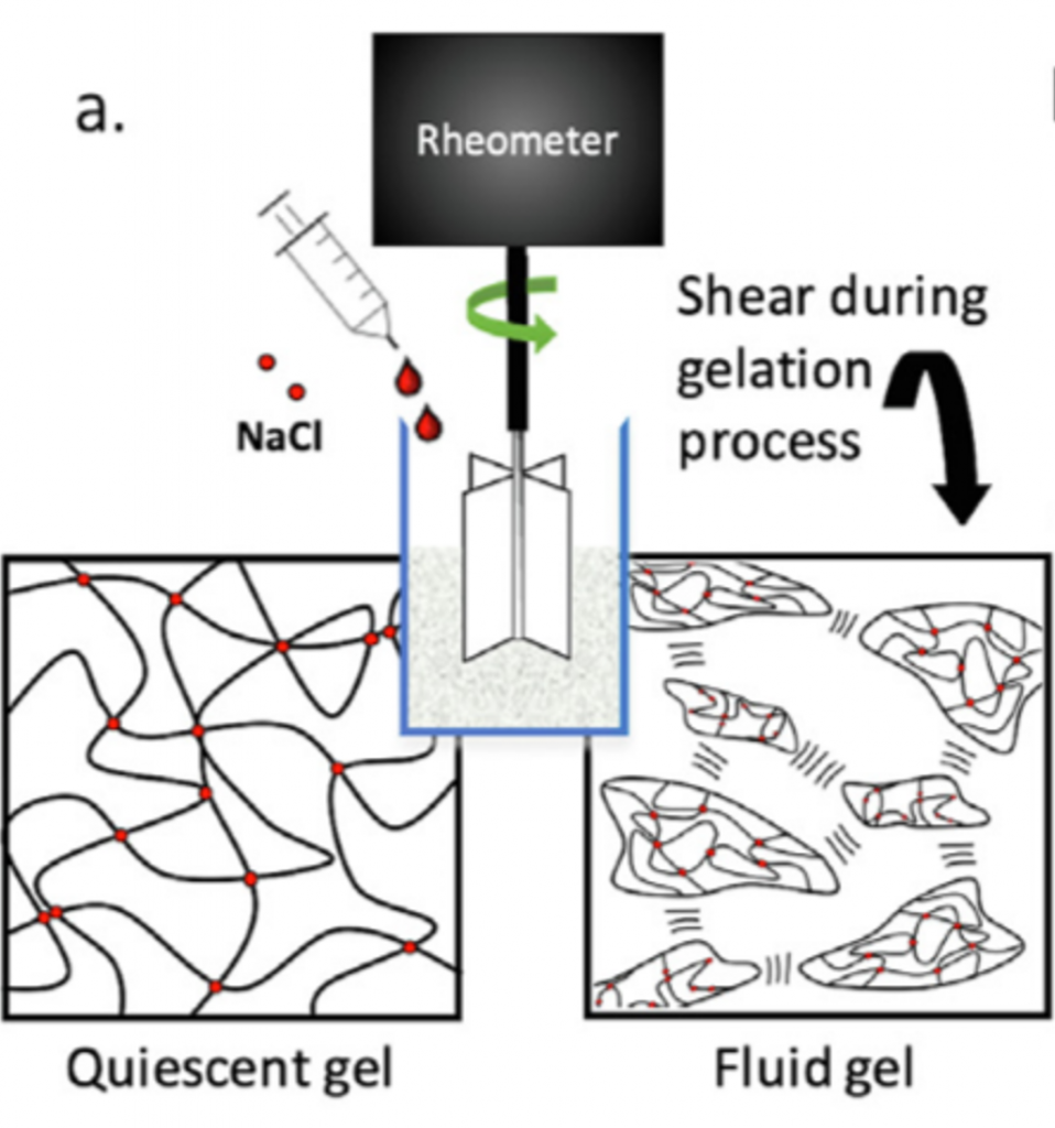 Illustration showing a rheometer with NaCl and the Shear during gelation process. Quiescent gel looks like wavy abstract lines connected with red dots and Fluid gel looks like single-cell organisms.